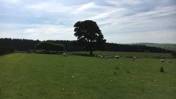 Long-term opportunity to manage 1,200 sheep…in Northumberland