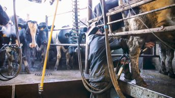 Dairy industry facing a shortage of workers after government decision
