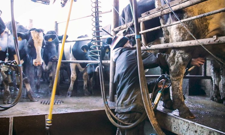 75% of northern farmers 'not happy' with milk price – survey