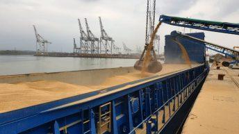 Grain price: Wheat bounces back a little