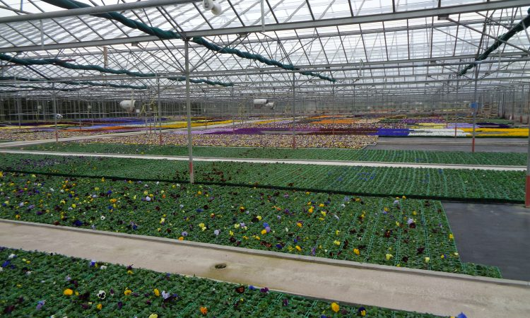 'Uncertain future' for ornamentals sector as government rules out support