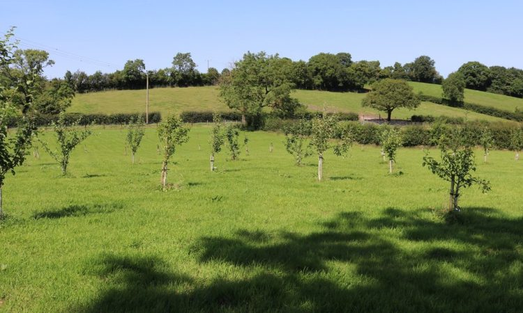 CAFRE set to host orchard management event at Loughry campus
