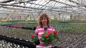 UK's £1.4 billion horticultural sector at risk of lockdown ruin