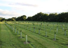 Shropshire farmers plant 4,000 trees in anticipation of ELMS changes