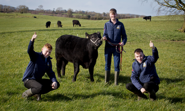 ABP Angus Youth Challenge winners announced on YouTube