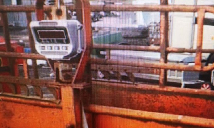 Investigations underway into theft of cattle scales