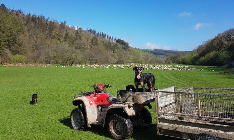 150 attend UK-based 'digital farm walk'