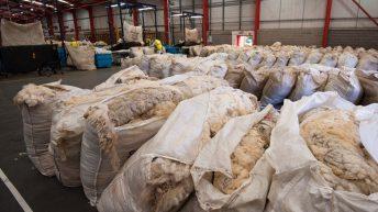 British Wool warns of 10 million kilos of unsold wool