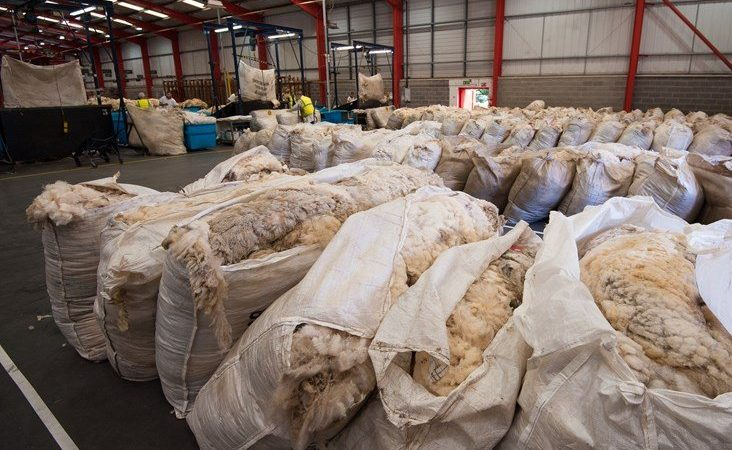 British Wool warns of 10 million kilos of unsold wool