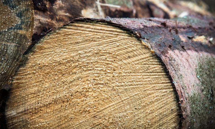 Forestry and timber markets face new challenges over the coming years – report