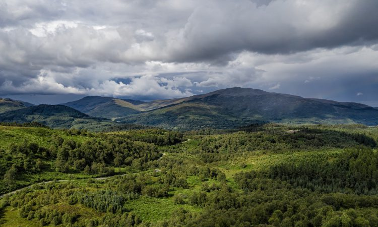 UK forestry investment market worth £121 million during 2019 – Savills report