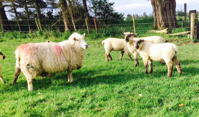 Time to look back on the lambing season…while it's still fresh in the memory