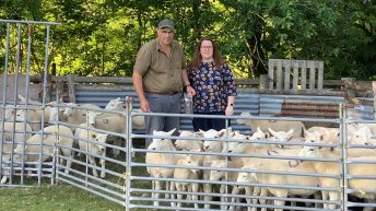 Welsh farmers testing the way for effective worming treatments