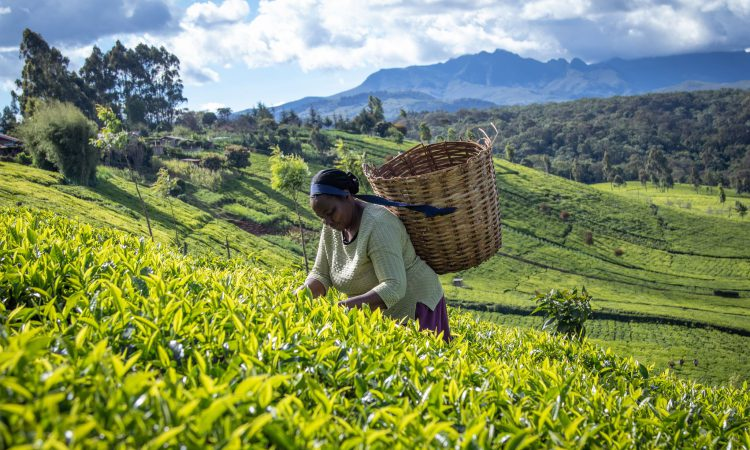 'More robust' Rainforest Alliancestandard to address 'climate-smart' agriculture and child labour