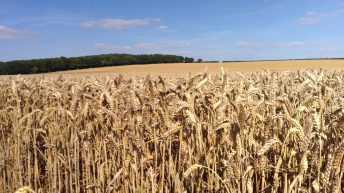 Demand uncertainty in grain markets