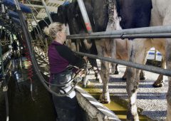 Analysis: Dairy commodity prices continue surge in recent weeks