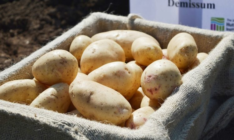 Fast-maturing, resilient potatoes in Hutton researchers' sights