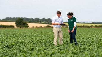 UK sugar beet growers to receive first ever market-linked bonus pay-outs