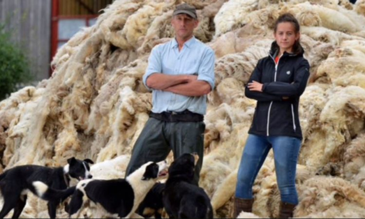 Almost 18,000 sign campaign for wool to be mandated in construction