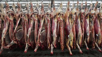 EU predicts drop in meat consumption for 2020