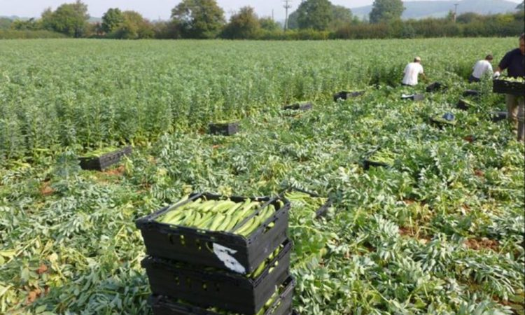 Covid-19: 73 people test positive on Herefordshire farm