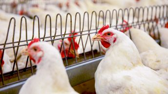 Banham Poultry reopens after Covid-19 outbreak forced closure
