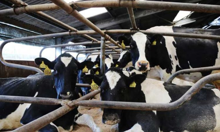 Scots project gets funding to develop digital dairy tracing