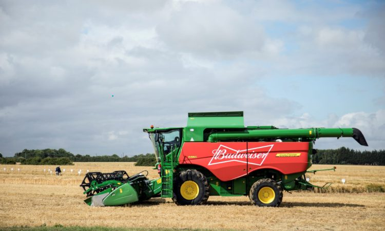Budweiser UK now sourcing 100% of its barley from British farms