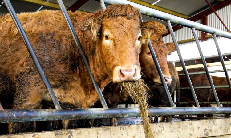 2 NI beef processors secure access for US export