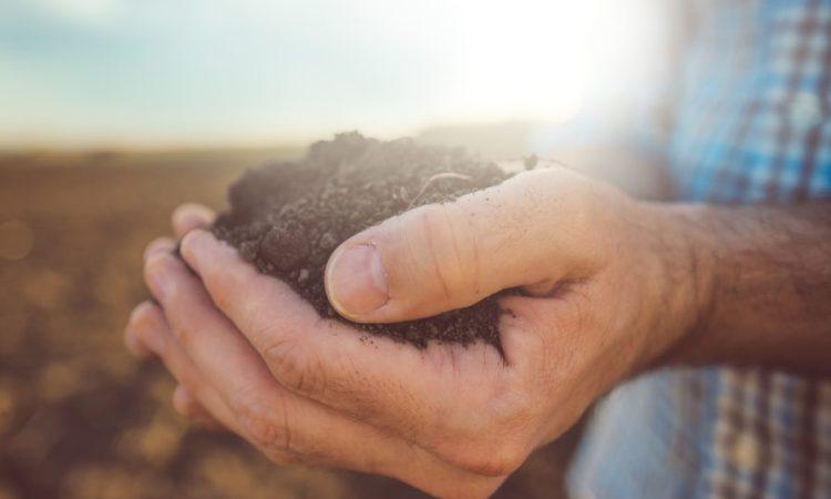 Get soil sampling this autumn