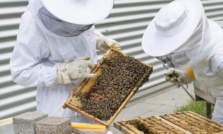 Defra launches the Healthy Bees Plan 2030 to help protect honey bees
