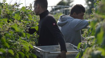 'The UK government must arrive quickly at a decision' on seasonal workers – NFUS