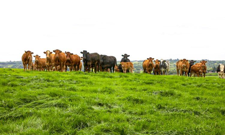 DAERA publishes 'Farm Business Data' handbook