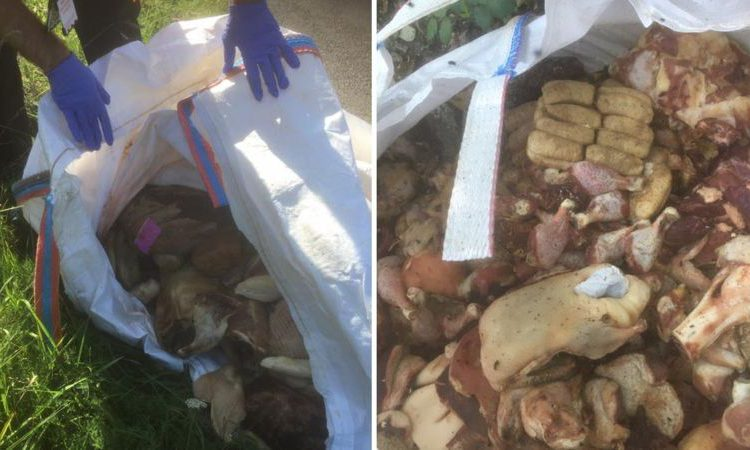 2t of rotting meat dumped in the countryside by fly-tippers