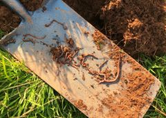 Soil health: 'The most valuable tool on your farm is your spade'
