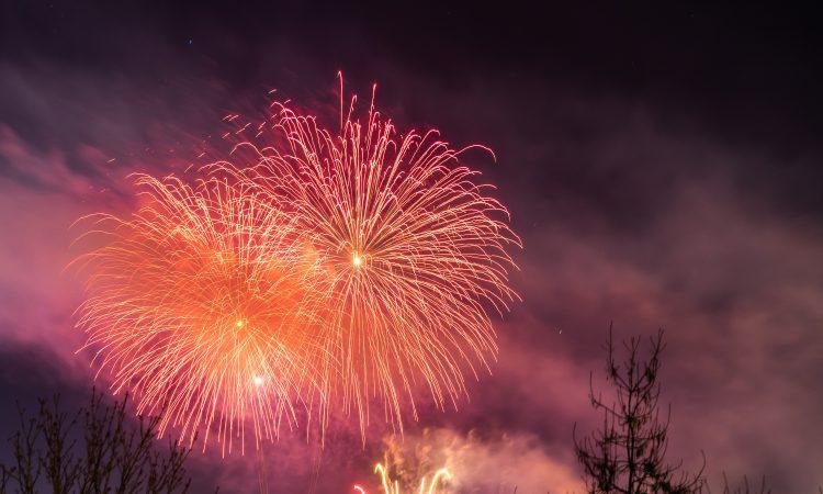 BVA urges animal owners to take firework precautions now