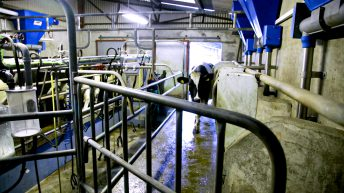 Dairy hub seminar goes digital for AgriScot 2020