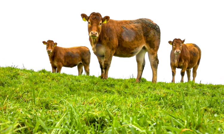 NI stakeholders warn of potential objection to Irish Grass-Fed Beef PGI