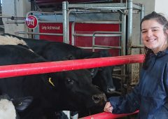 NI dairy research project to improve welfare and production in robotic systems