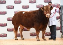 Limousin bulls average over £3,200 at Welsh sale