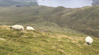 NFU Scotland reminds farmers of SUSSS deadline