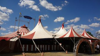 BVA welcomes ban on use of live wild animals in Welsh circuses