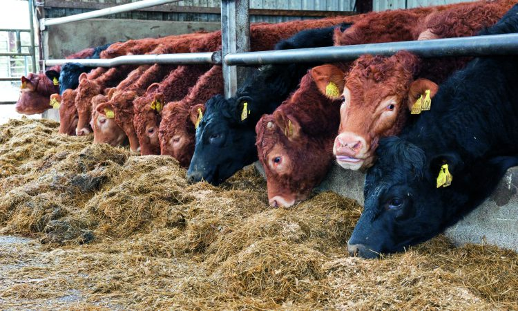 Prices remain steady in Northern Ireland this week