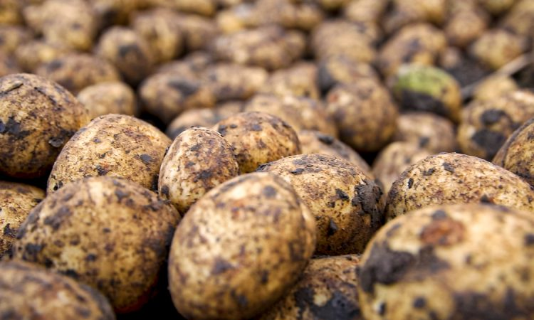 Poots calls on GB counterparts to take step in over soil and plant trade restrictions
