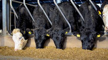 'Farmers should consider all options as beef and lamb prices rise'