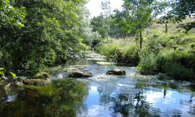 River trust offers 75% grant to farmers in Ballinderry catchment