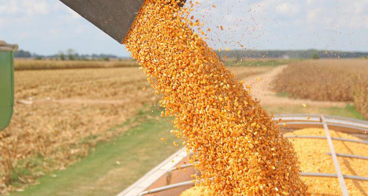 Argentina lifts corn exports ban and introduces 30,000t daily sales cap
