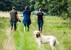 Report shows dog owners not present in 89% of livestock worrying cases