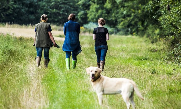 NFU Cymru calls for greater responsibility from dog owners after sheep attack