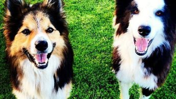 'Northern Ireland's pet owners now facing onerous documentary checks' – Poots